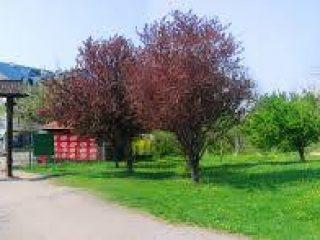 Спомен парк Чачалица 02
