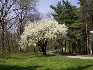 Спомен парк Чачалица 04
